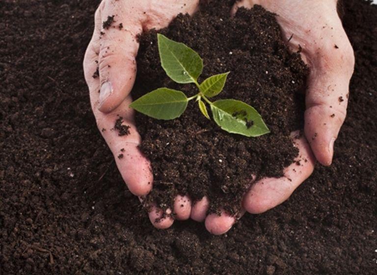 soil-remediation2
